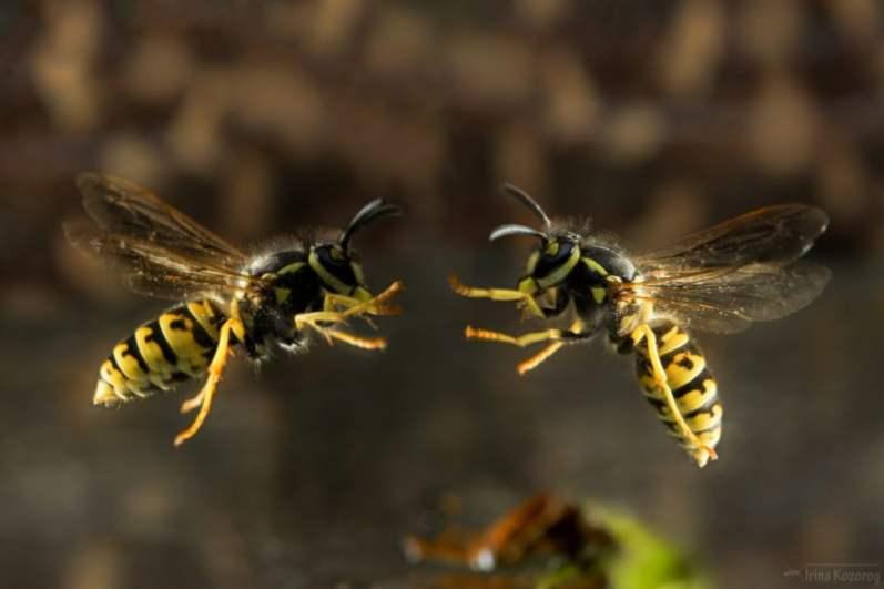 Сонник: осы во сне – ваши конкуренты и враги потерпят неудачу, когда захотят на вас наговорить или насолить вам.