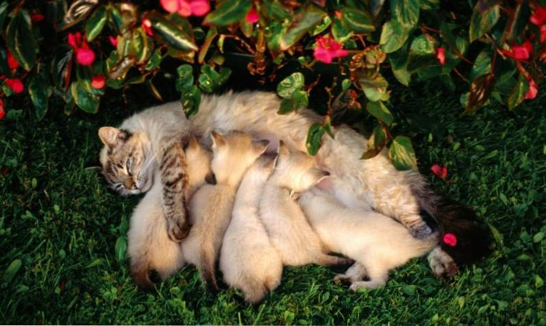 Drobné dospievajúci mačička pics