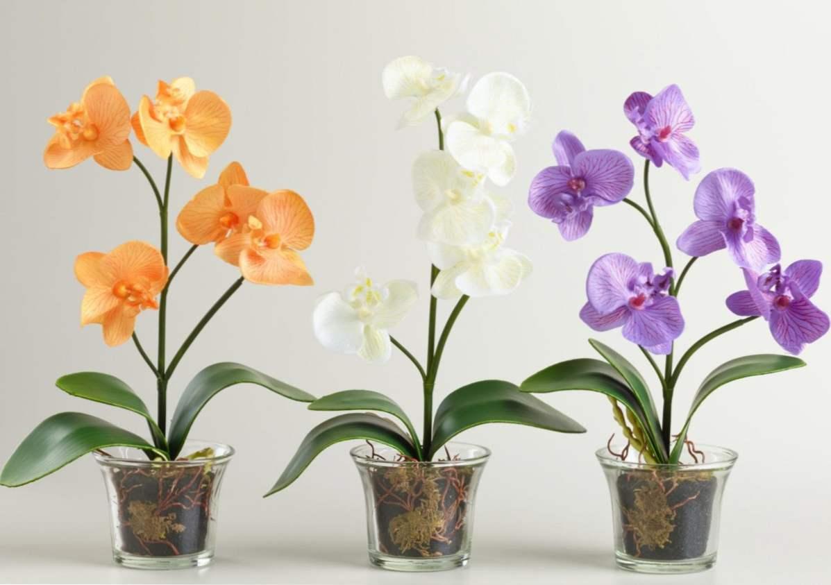 Pielęgnacja Storczyków Phalaenopsis W Domu I Przeszczep Po